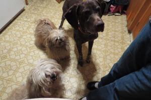 3beggars