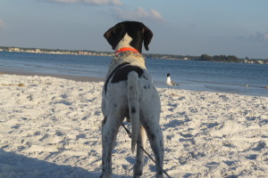 BeachBoy2